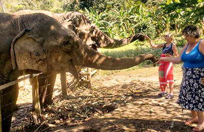 Two women touching elephant's trunks in Thailand